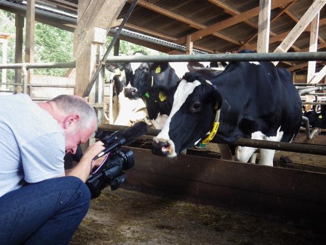 Kameramann Ernst Matthiesen mit Kuh