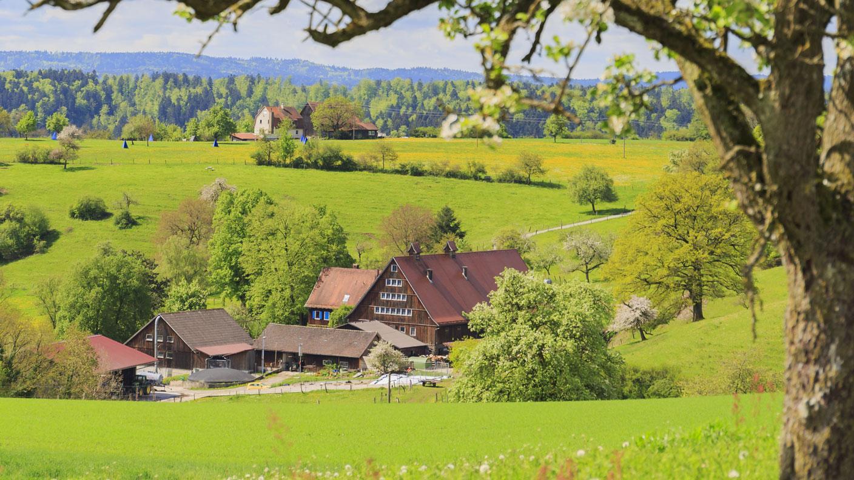 vo%cc%88lkleswaldhof-von-anja-und-pius-frey